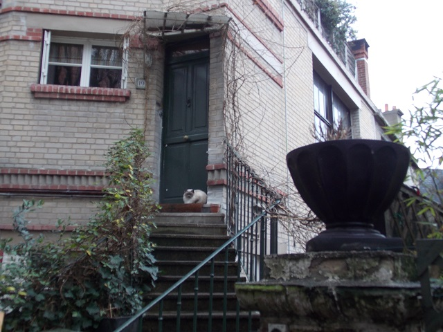 Cat on Step Montmartre.jpg
