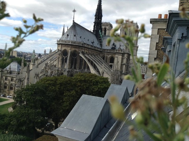 Notre Dame from my Window 2